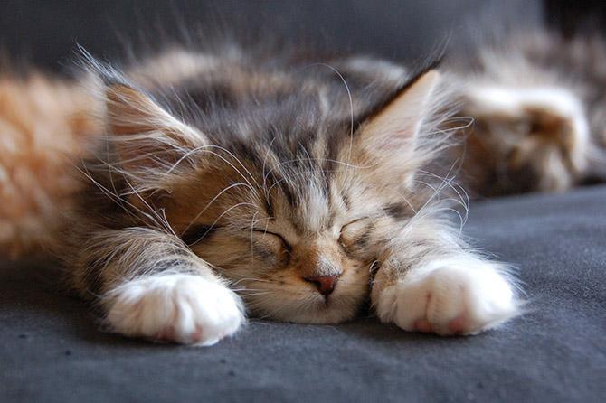 Дизайн для котов (33 фото)