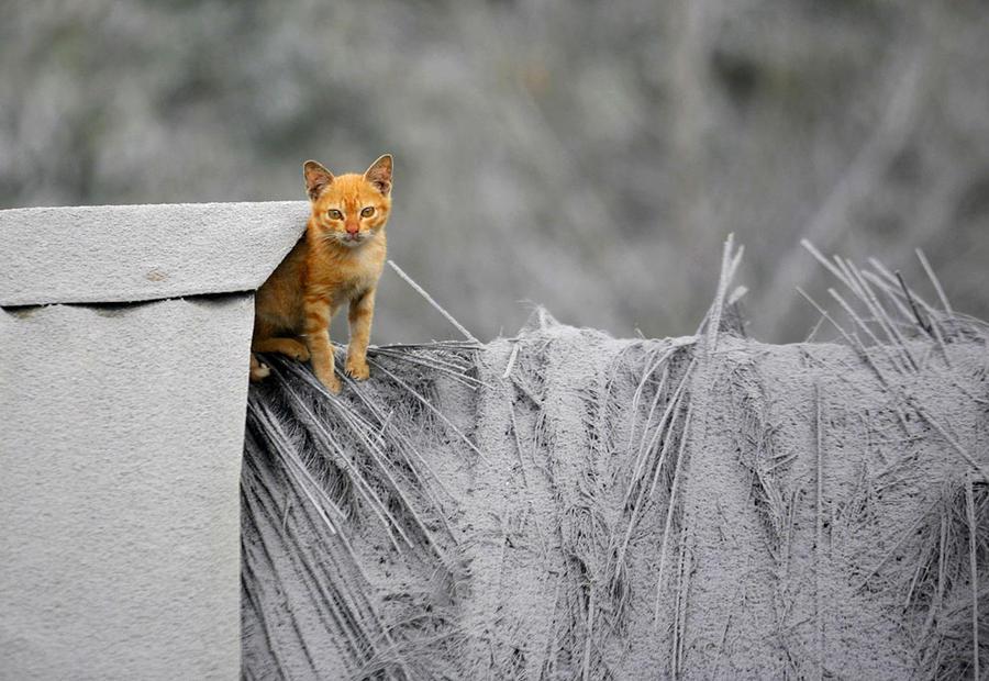 Марафон Бэдуотер 2013 в Долине смерти (46 фото)